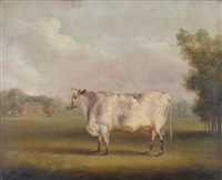 shorthorn heifer standing in a parkland by william henry davis