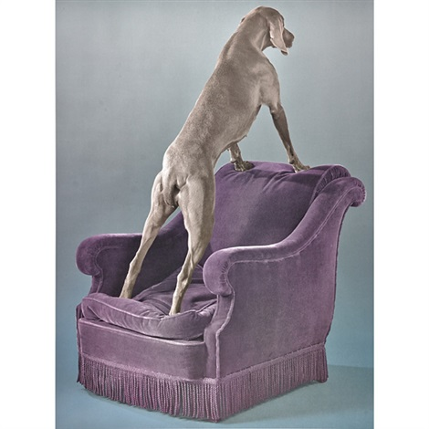 override and overview 2 works by william wegman