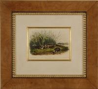 untitled (4 works) by john woodhouse audubon