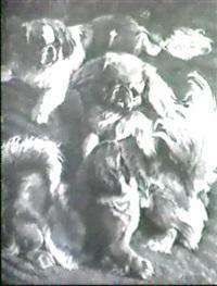 drei spielende pekinesen by erwin aichele