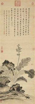 chinese cabbage by jiang tingxi