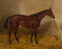 rennpferd im stall by emil adam
