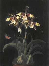 blühende orchidee in einem blumentopf mit schmetterling by camill macklot