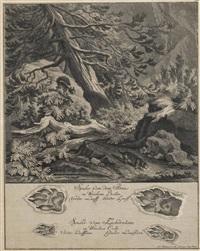 eichhörnchen und iltis mit ihren spuren by johann elias ridinger