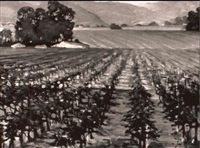 vineyard, california by joseph areno