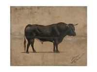 toro de moruve by julian alcaraz