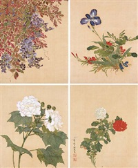 flowers (album of 12 leaves) by que lan