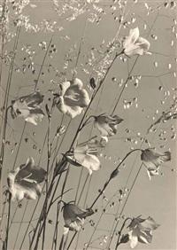 glockenblumen und ziergras by max baur
