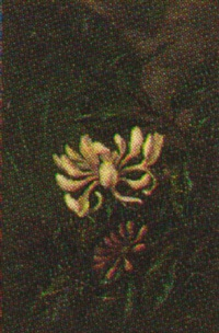 blomstrende caprifolie by alfrida baadsgaard