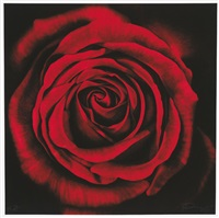 ohne titel (rose) by robert longo