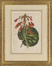 botanical studies (8 works, some handcolored engravins) by samuel holden