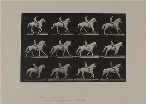 animal locomotion plate 617 by eadweard muybridge
