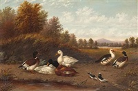 a raft of ducks near a pond by howard l. hill