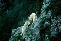 antelope by xi zhinong