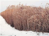 winter straw by miguel correa