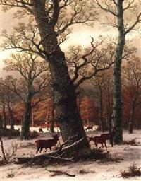 rotwild auf verschneiter waldlichtung by caesar bimmermann