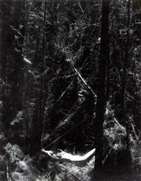 nude in dead forest by wynn bullock