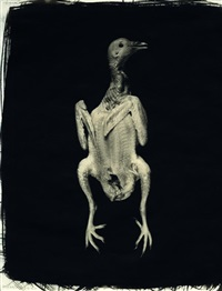 pigeon (collab. w/ allan ludwig) by gwen akin