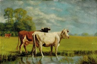 pair of works: cattle in landscape by polly hill