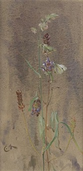 prunella and white butterfly by edwin john alexander