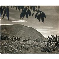 landscape by tina modotti