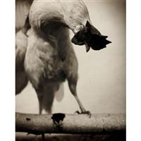 hahn / rooster by rudolf koppitz