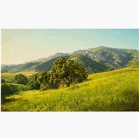 rolling california hills in spring by john grossman