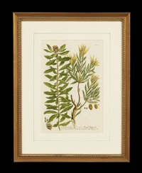 botanicals (from: phytanthoza iconographia) (pair) by johann wilhelm weinmann