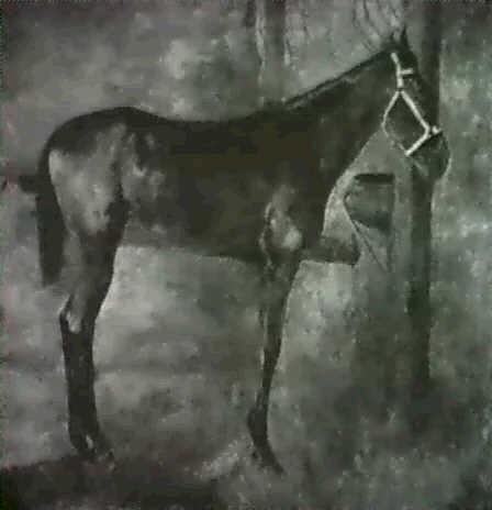 frankfurt pferd im stall by wilhelm altheim