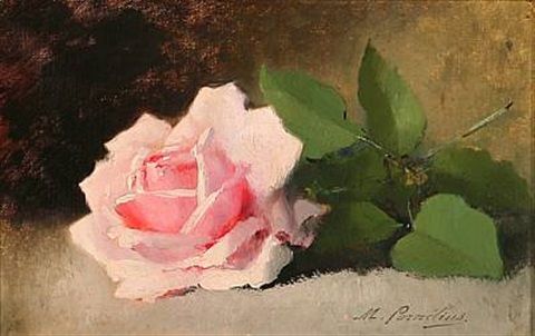 a pink rose on a table by marie lucie cornelius