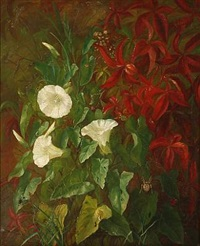 bindweed at a garden wall by alfrida baadsgaard