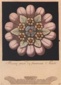 rosettes by carlo antonini