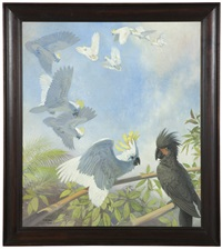 cockatoos by julius moessel