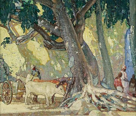 cotton silk tree st thomas virgin islands by richard edward miller