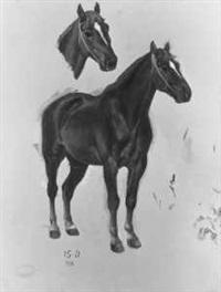 pferdestudien by emmanuel grammont