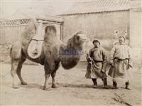 骆驼与人 (camel in peking) by yamamoto sanshichirou