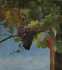 grape plants with green and blue grapes by ida marie margrethe heerfordt