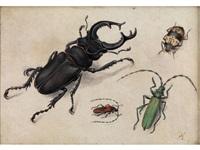 hirschkäfer und drei weitere käfer auf hellem grund by pieter holsteyn the elder