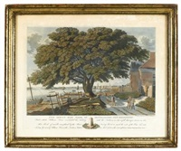 the great elm tree of shackamaxon..., philadelphia, pa by george lehman