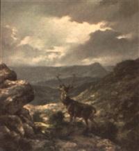 ciervo by luis aldehuela