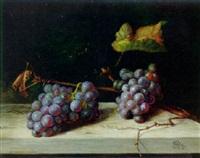 stilleben mit blauen trauben auf weißer tischplatte by alfrida baadsgaard