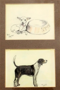study of a chihuahua beside a water bowl; study of a beagle (2 works) by cecil charles windsor aldin