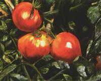 tomaten by reiner staudacher