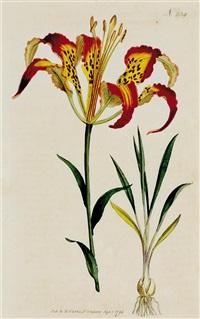 eight works: botanicals by william curtis