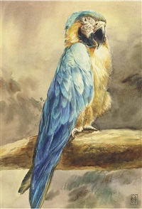 a blue and gold macaw parrot by winifred marie louise austen