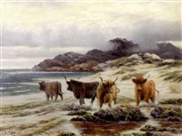 highland cattle by the shore by sidney pike
