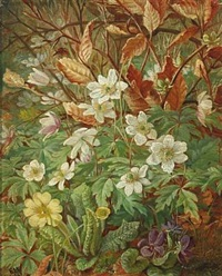 forest floor with spring flowers by emma mulvad