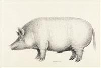 ohne titel (schwein) by michael haussmann