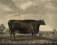 the bradby heifer, of the devon and alderney cross by william ward