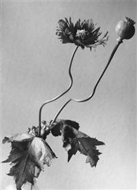 pflanzenstudie by ruth lauterbach-baenisch